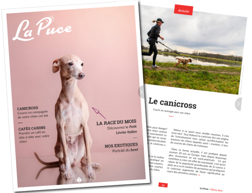 La revue LA PUCE: FouBraque et le canicross!!